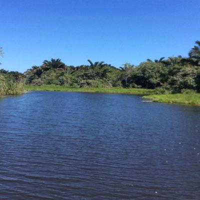Hippo in Lake AmanzimnyanaInterconnecting channel between Lake Amanzimnyana and Lake Nhlange