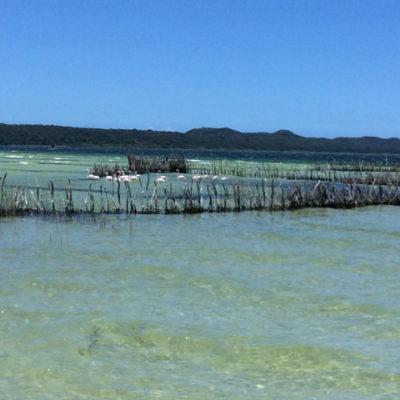 Old fish traps in Lake Nhlange
